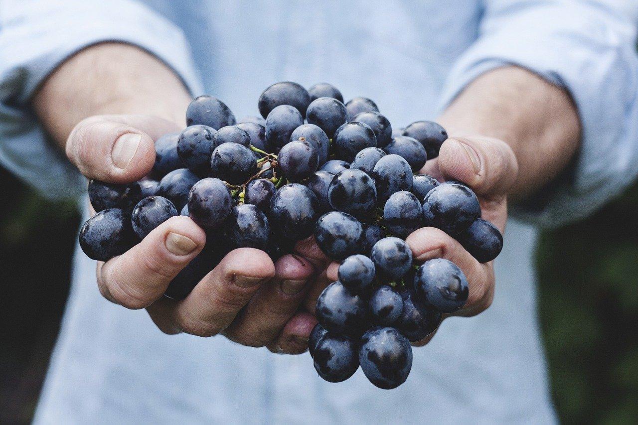 鉄分補給で免疫力を高める!食品でナチュラルに。